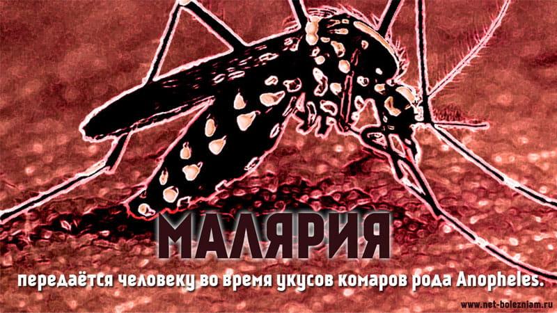 Малярия передаётся человеку во время укусов комаров рода Anopheles.