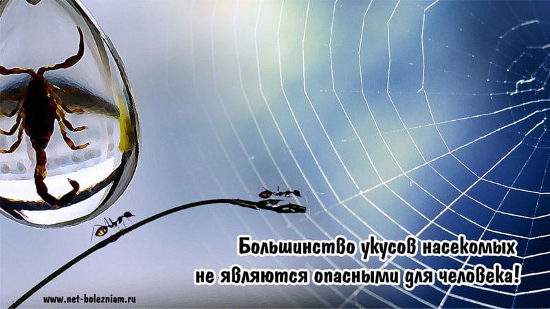 Большинство укусов насекомых не являются опасными для человека!