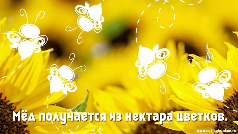 Мёд получается из нектара цветков.