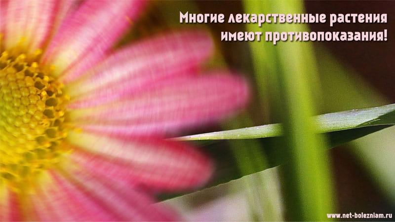 Многие лекарственные растения имеют противопоказания!